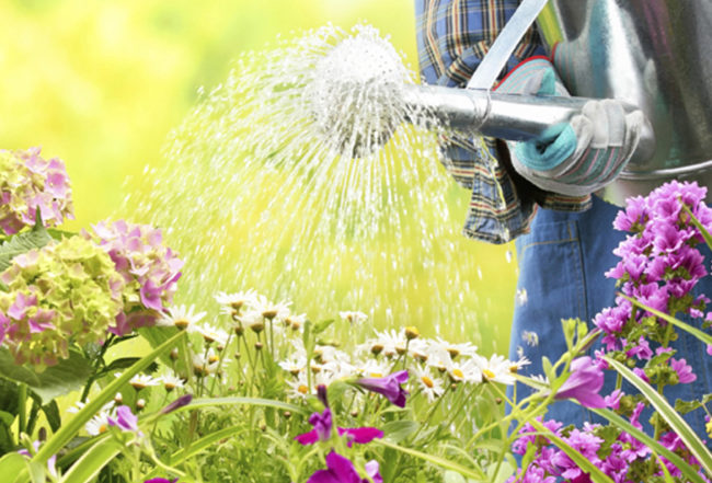delbard jardin travaux avril blog