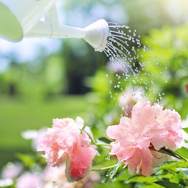 Blog Delbard potager jardin plantes