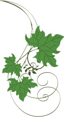 vigne-jardin-blog-conseils-astuces-jardinage-entretien