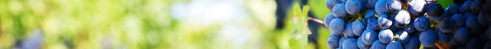 avril delbard blog jardin travaux