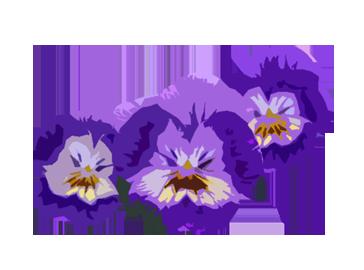 pensées-jardin-fleurs-automne-octobre-plantation-conseils-blog-delbard