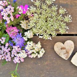 vivaces jardin fleurs bouquet delbard