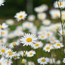 vivaces jardin blog delbard