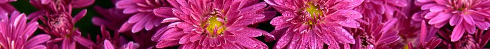 delbard jardin fleurs avril travaux