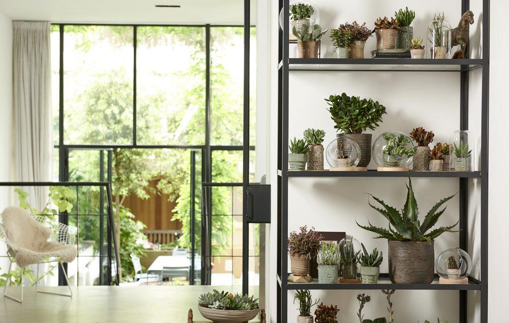 Plantes grasses succulentes Delbard Blog Jardin