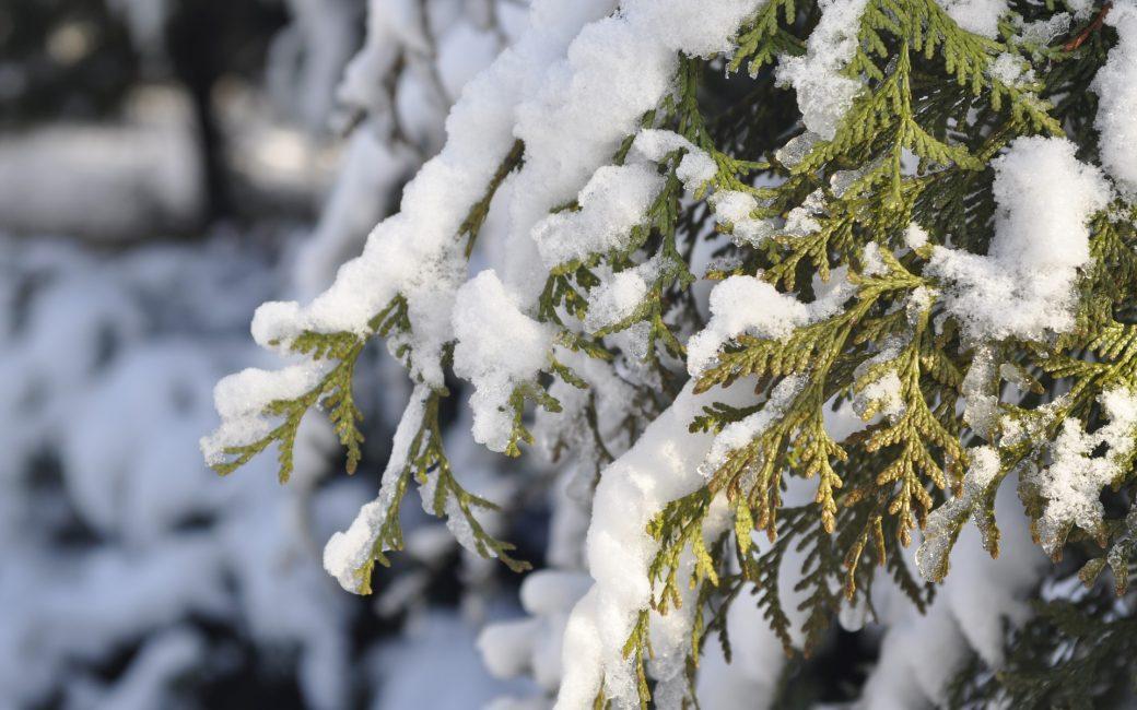 décembre-blog-delbard-jardin-maison-hiver-conseils
